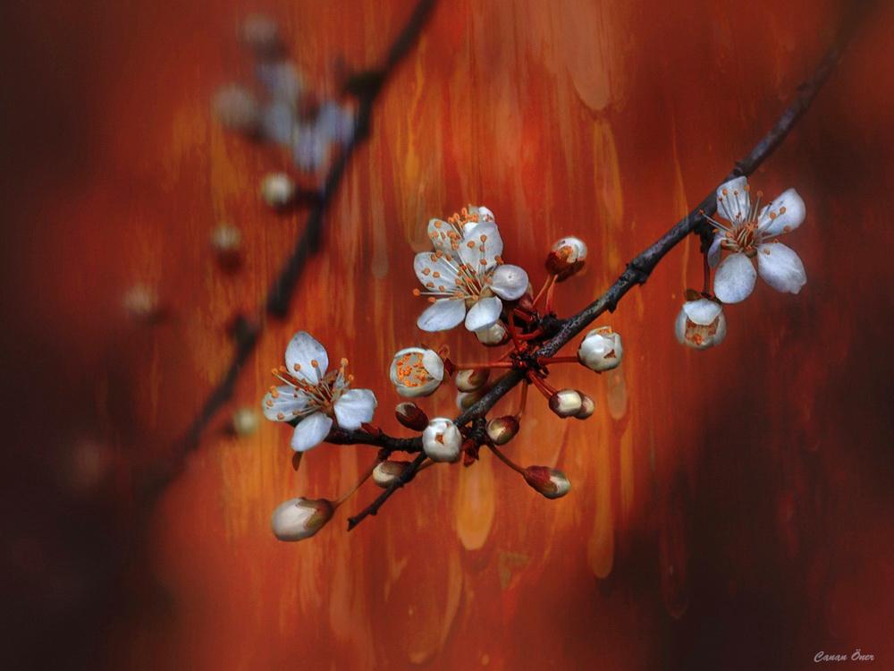 Spring In My Soul..II