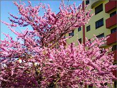 Spring in Odivelas  city street