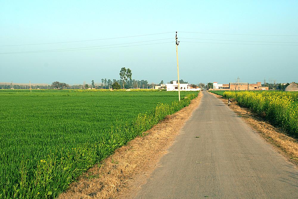 Spring in Punjab