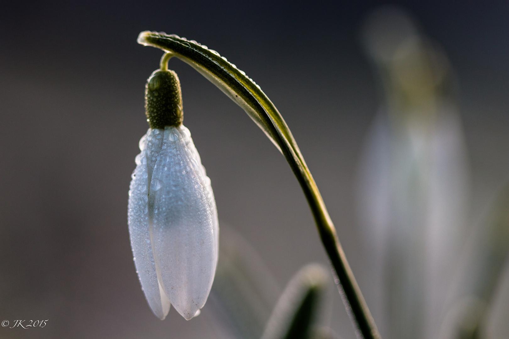 spring is coming soon ..1