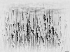 Spring patterns 1