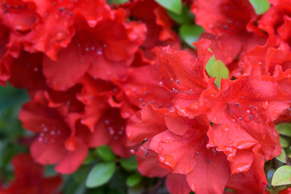 Spring RED !!