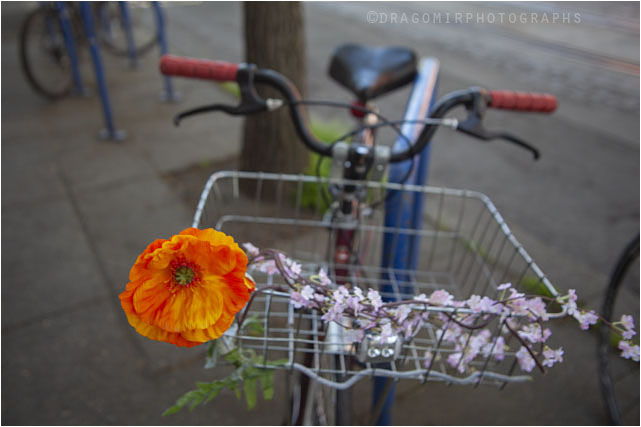 Spring Ride One