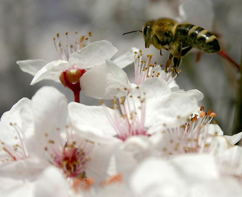 spring sound and aroma
