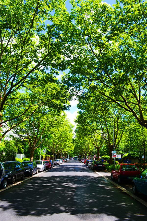 Spring street