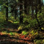 spring time forest