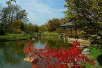 Spring visit to a Japanese garden (1)