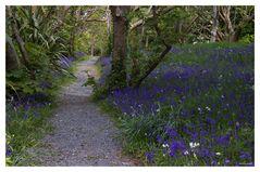 spring walking................