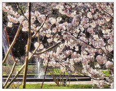 Springbrunnen hinter zart rosa Blüten