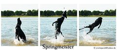 Springmeister