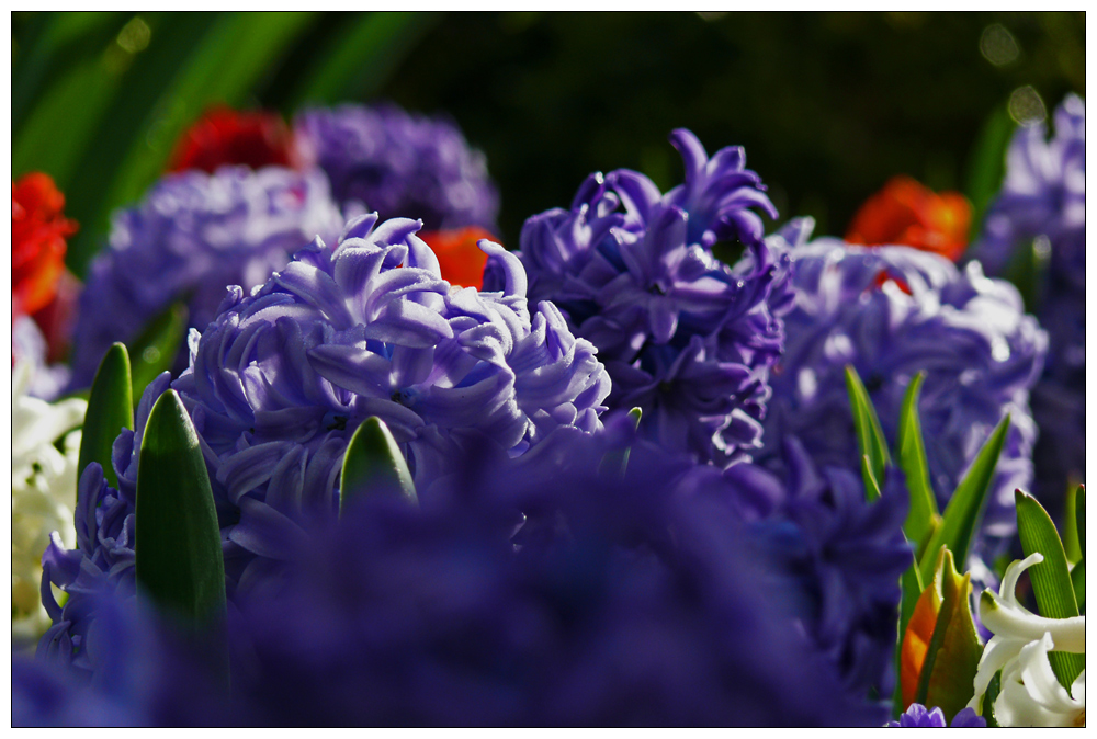 springtime...