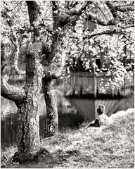 Springtime by a Lake - A Meadowlark Moment