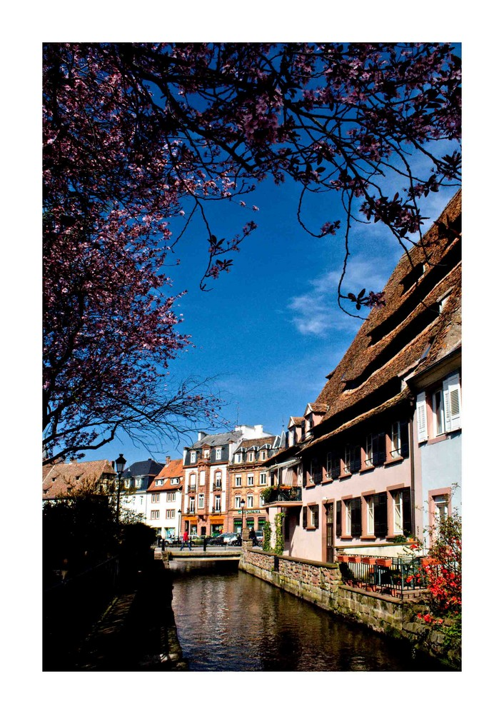 *springtime in wissembourg*