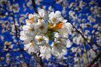 Springtime N°.1