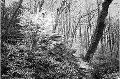 Springtime on Potomac Heritage Trail