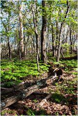 Springtime on Sugarloaf Mountain - No.2