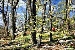 Springtime on Sugarloaf Mountain - No.3