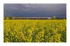 Springtime Train