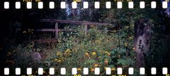 Sprocket Rocket Harz