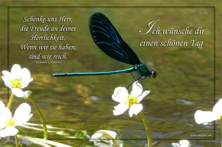 Spruchkarte Libelle Ich Wünsche Dir Einen Schönen Tag Foto Bild