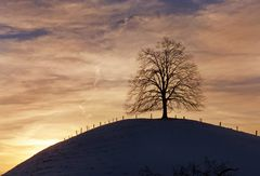 Sprümüli Baum