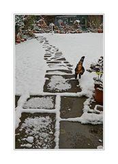 Sprung ins Schnee