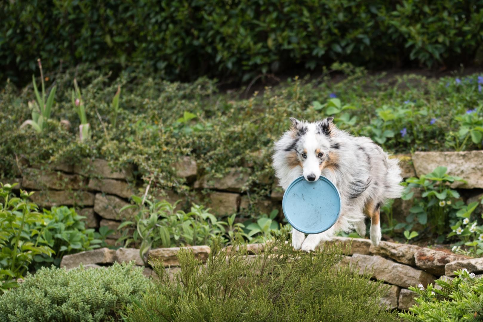 Sprung mit Frisbee