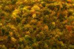 Spruzzi d'autunno