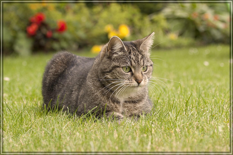Spunk auf Pirsch im Garten