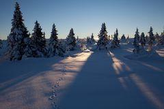 Spur im Schnee zur Sonne