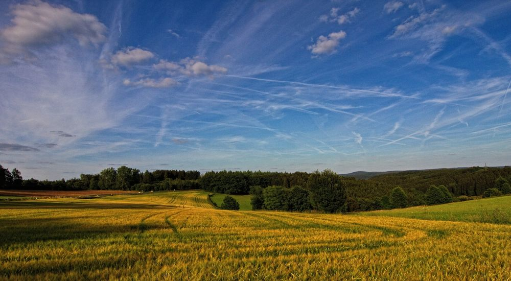 Spuren im Getreidefeld