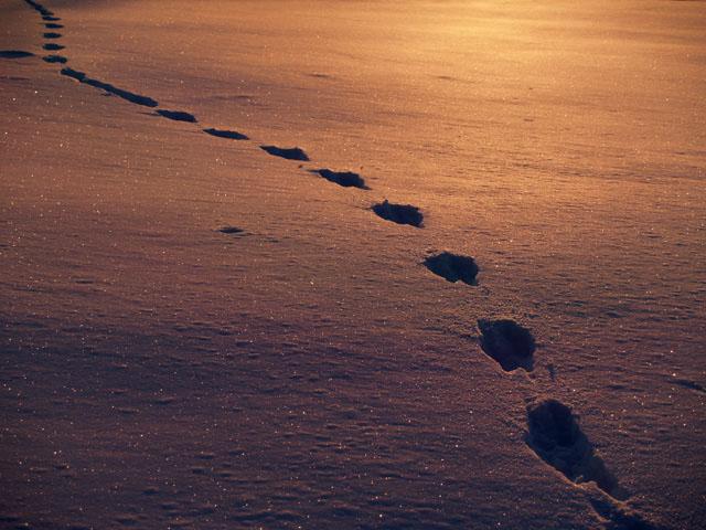 Spuren im Schnee - Orme sulla neve