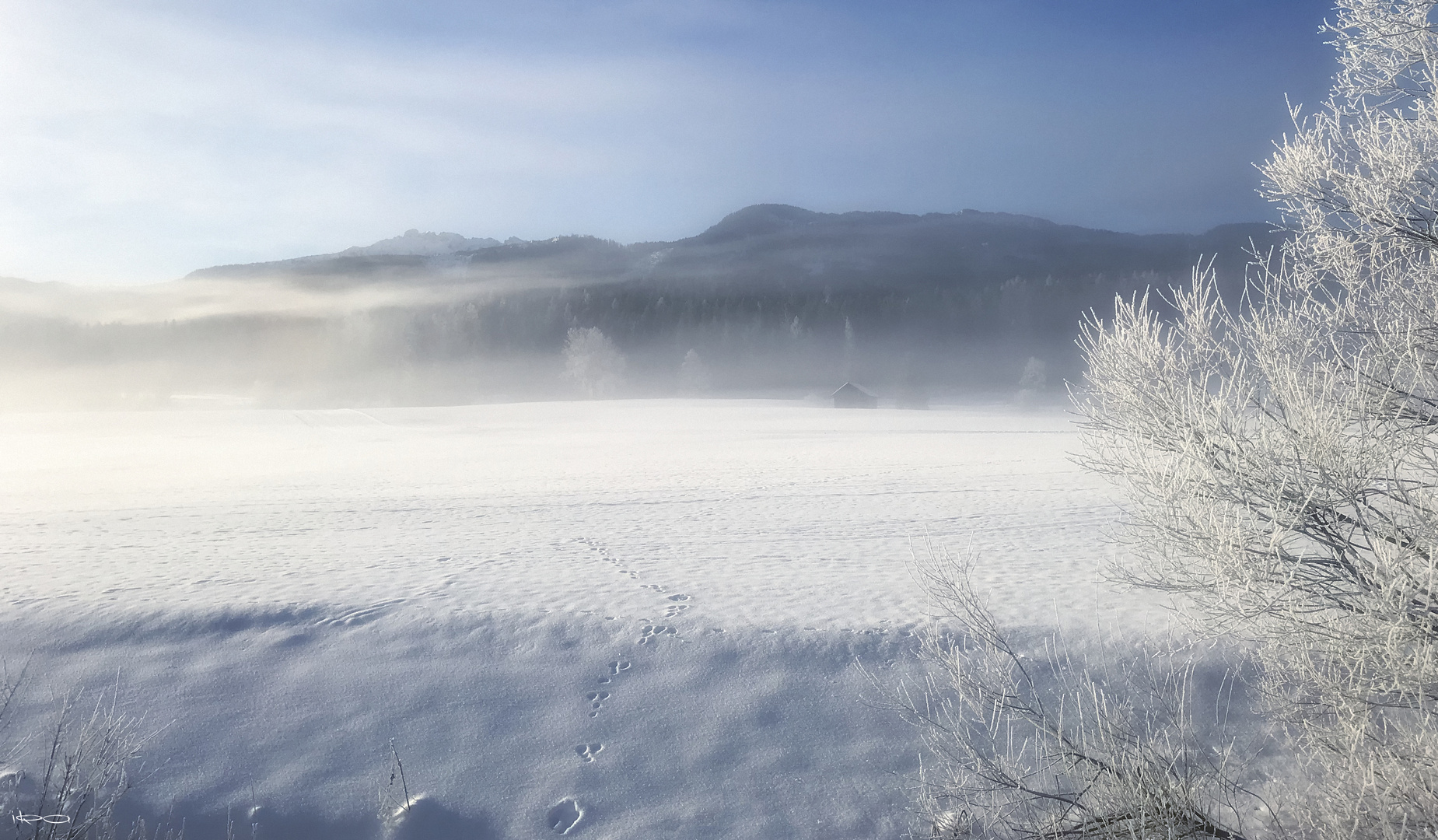 Spuren in der Kälte