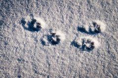 Spuren mit Schnee