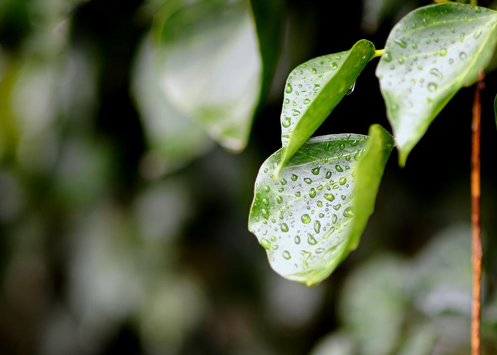 Spuren vom Regen