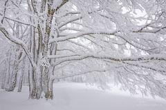 Spuren von Wind und Frost