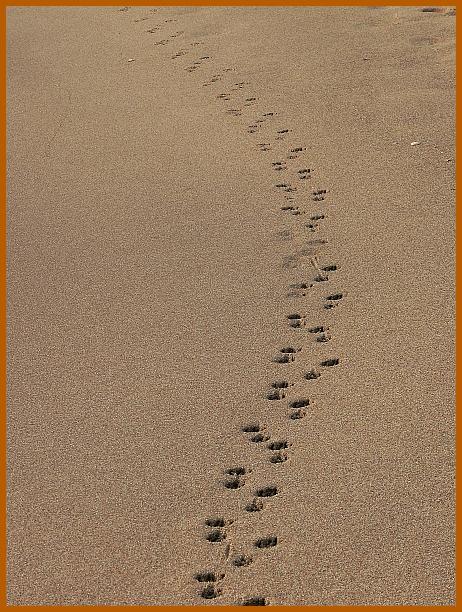 SPUREN! Wohin führen sie (uns) (mich)?