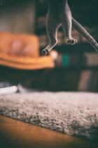 SpVgg Katze : Kamera 1860 - 1:0