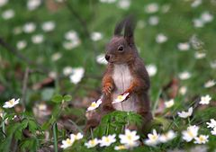 squirrel between small roses