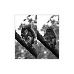 squirrel - nld