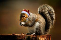 Squirrel wünscht FROHE WEIHNACHTEN