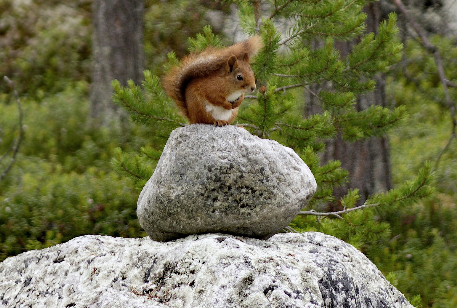 Squirrel_lookout