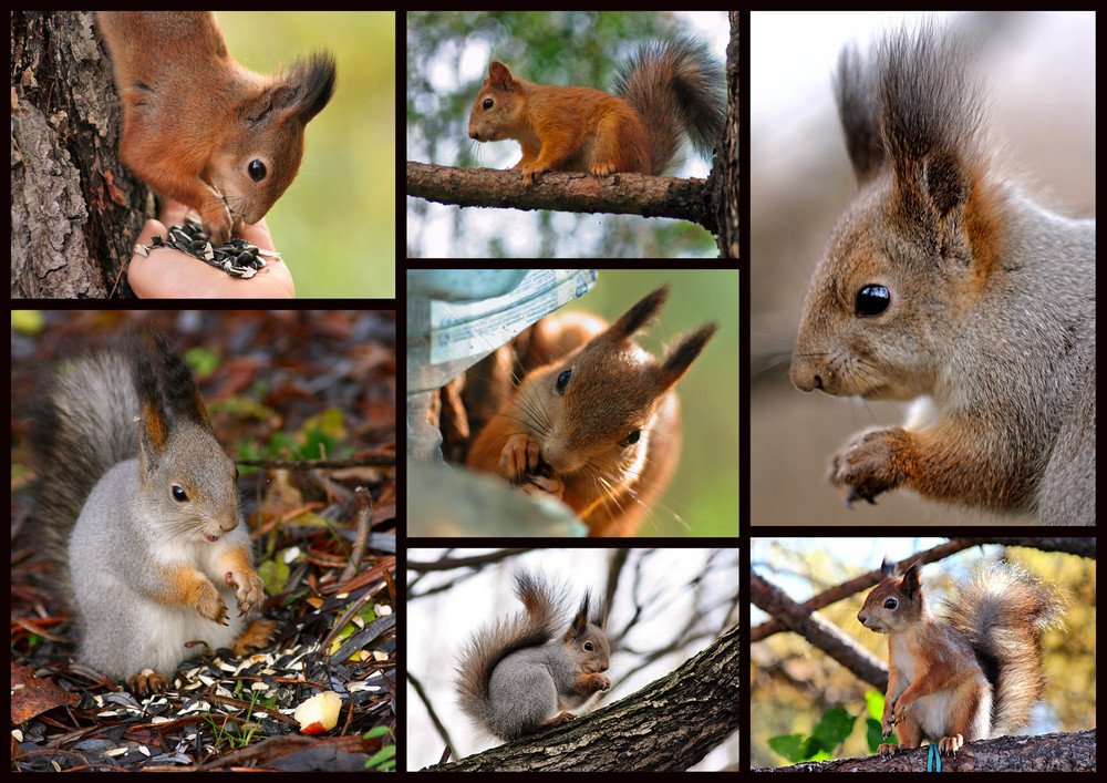 Squirrels - my friends