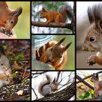 Squirrels - my friends