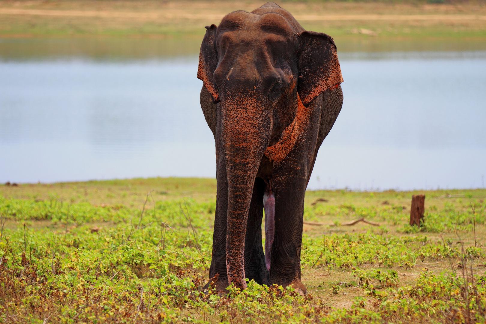 sri lanka national park