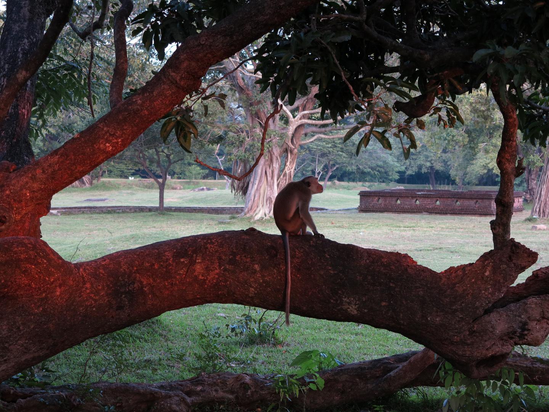 SRI LANKA - Relaxtime in Polonnaruwa