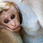 srilanca: madre natura