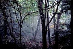 St. Anthonies Wilderness