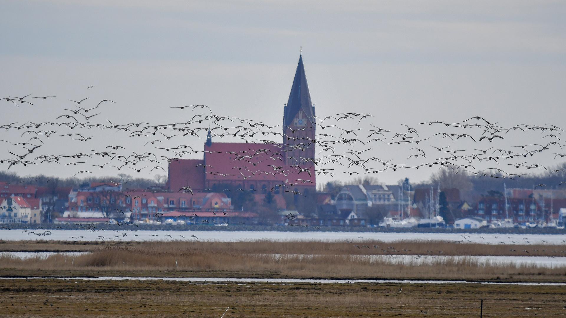 Kirche Barth