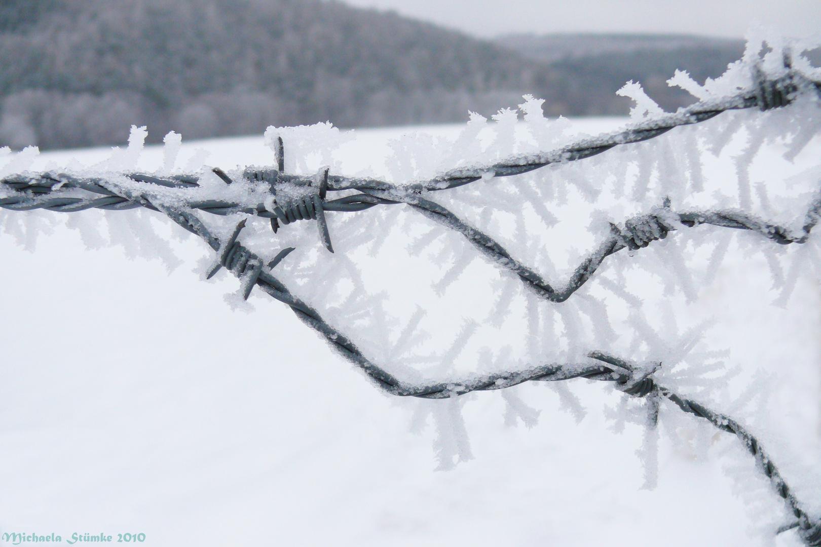 Stacheldraht in Eis